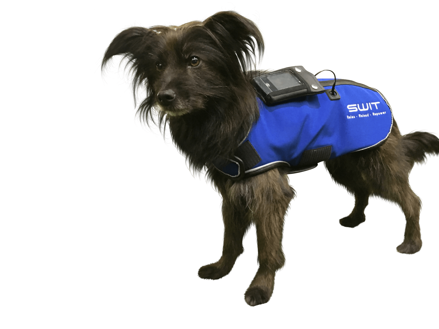 Switplus-Dog-jacket