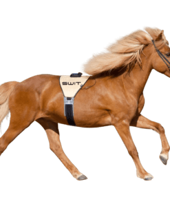 Switplus-paard-powerbelt