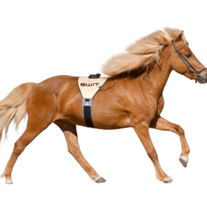 Switplus-cheval-PowerBelt