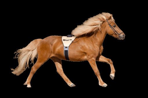 switplus-pferd-powerbelt